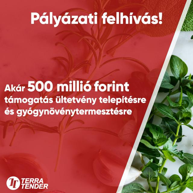 Akár 500 millió forint támogatás ültetvénytelepítésre és gyógynövénytermesztésre!